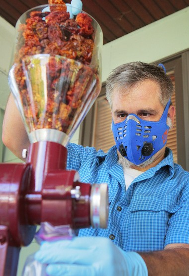 Dave Bell wears a respirator and protective gloves as he grinds smoked and dried super hot chiles into powder on the front porch of his home.