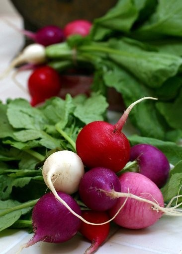 Easter egg radishes come in a delightful array of colors- white, violet, pink and red.