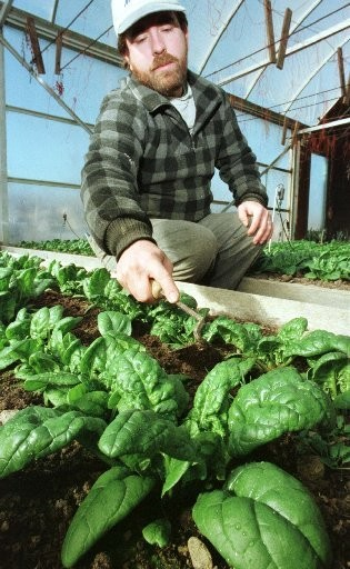 Farmers start spinach in the hoop house to get a jumpstart on the season. A new crop will go into the fields soon.