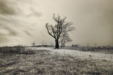 A moody, atmospheric photo of the Devil's Tree in Bernards