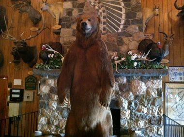 Goliath, the world's largest bear, is the star attraction at Space Farms.