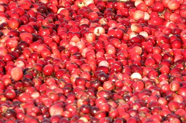 Cranberries at Cutts Brothers Farm in Bass River Township. (David Smith)