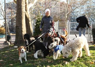 A dog walker leaves the 4th Street dog park in Hoboken on Nov. 21, 2014.