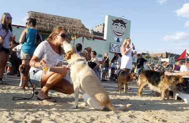 Danielle Hoffman of Wall Township is careful not to spill her Stoli Orange & Seven as she gets a kiss from her 6-year-old Yellow Lab named Jersey, at Yappy Hour at Asbury Park's Wonder Bar. (ANDREW MILLS/THE STAR-LEDGER)