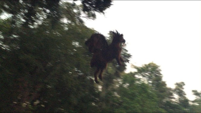 Reader Dave Black of Little Egg Harbor captured this photo in Galloway Township. He believes it could be the Jersey Devil. What do you think? (Photo provided by Dave Black)