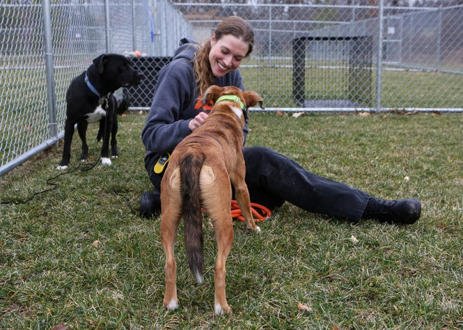 Kristen Collins with dogs Carl (left) and Pippi in an outdoor enclosure at the St. Hubert's Animal Welfare Center in Madison. Dogs at the ASPCA Behavioral Rehabilitation Center there are paired up in a buddy system to encourage social behavior and play. (Andre Malok | NJ Advance Media for NJ.com)