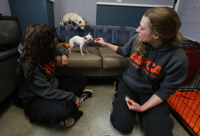 Animal rehabilitation counselor Jill Giovannetti and Collins inside a 'real-life' room at the ASPCA's rehabilitation center. The rooms simulate everyday home life for dogs. (Andre Malok | NJ Advance Media for NJ.com)