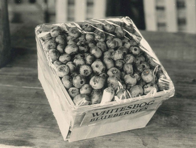 A carton of blueberries from Whitesbog. New Jersey no longer leads the country in blueberry production. (Courtesy Historic Whitesbog Village/Whitesbog Preservation Trust)