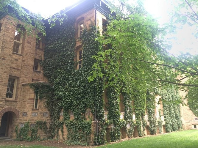 Ivy climbs up the brick exterior of Nassau Hall, the oldest building at Princeton University. (Sydney Shaw | NJ Advance Media for NJ.com)