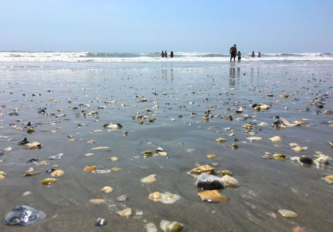 All Atlantic City beaches accessible free of charge.