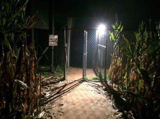 A scene from the Killer Kornfield at the Field of Terror in East Windsor. (Amy Kuperinsky | NJ Advance Media for NJ.com)