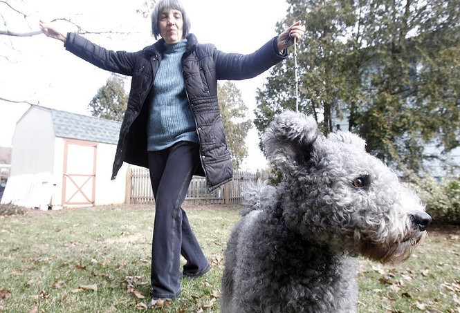 Marika Foreman owns and handles her pumi. The breed was added to Westminster's 2017 competition after being recognized by the American Kennel Club in 2016. (Aristide Economopoulos | NJ Advance Media) for NJ.com)