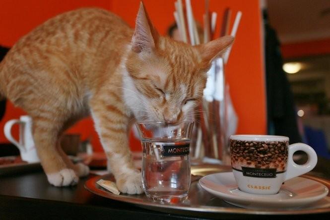 A cat at the cat cafe Envi-Cafe in Brno, Czech Republic. RADEK MICA/AFP/Getty Images
