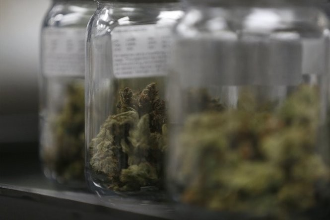 Cannabis flowers in jars for display at Breakwater Treatment and Wellness in Cranbury. The center is a state licensed medical marijuana dispensary, Oct. 15, 2015. (Patti Sapone | NJ Advance Media for NJ.com)