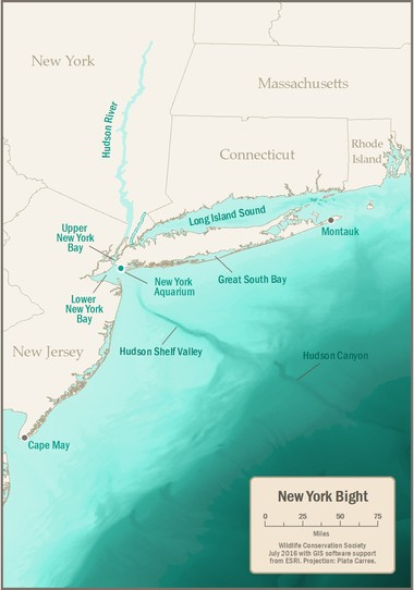 Map of New York Bight with Hudson Canyon.