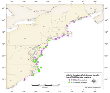 This map from NOAA Fisheries shows where humpback whales have been found stranded on the Atlantic Coast since Jan. 1, 2016. Six of these strandings have occurred in New Jersey.