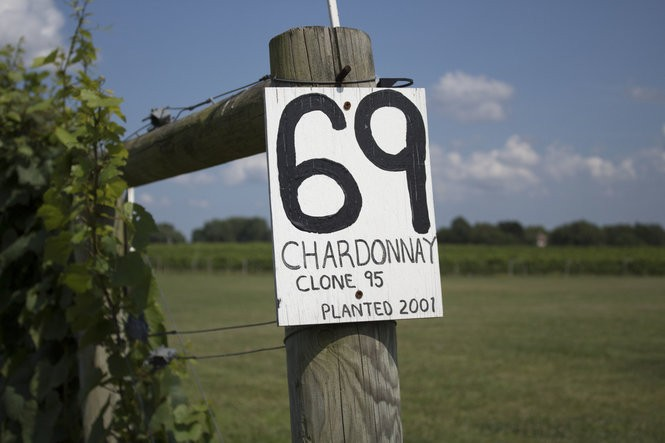 Chardonnay is one of the best-growing and also the most popular wine grown in Northern New Jersey.