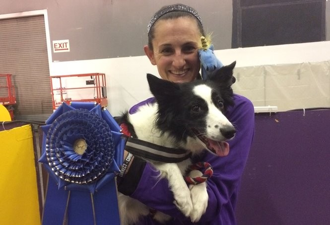 Jessica Ajoux of Sparta with Fame, her border collie. The pair won the 20-inch division, then went on to win the entire competition at the 2018 Westminster Masters Agility Championship at Pier 94 in New York on Saturday, Feb. 10. (Amy Kuperinsky | NJ Advance Media for NJ.com)