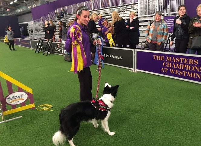 Jessica Ajoux of Sparta with Fame, her border collie. The pair won the 2018 Westminster Masters Agility Championship at Pier 94 in New York on Saturday, Feb. 10. (Amy Kuperinsky   NJ Advance Media for NJ.com)
