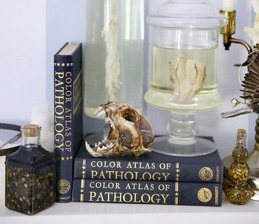 Some of Nicole Angemi's home collection of organic accessories, including gallstones, a lynx skull, spinal column and double uterus. The pathologists' assistant decorates her Merchantville house with creations of taxidermy and human specimens. (Aristide Economopoulos | NJ Advance Media for NJ.com)