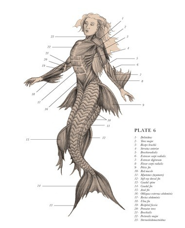 Siren Oceanus from E.B. Hudspethâs The Resurrectionist