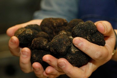 What does about a thousand dollars worth of truffles look like? This.