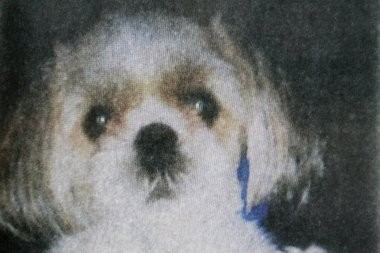 Honey Bey, a two-year-old Shih Tzu, was killed in August 2011 when Newark resident Haniyyah Barnes threw the dog into traffic in a dispute over a parking space.