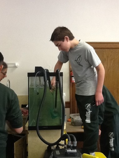 St. Thomas the Apostle student Daniel Ross checks the fish in the trout tank as part of the school's Trout in the Classroom project.
