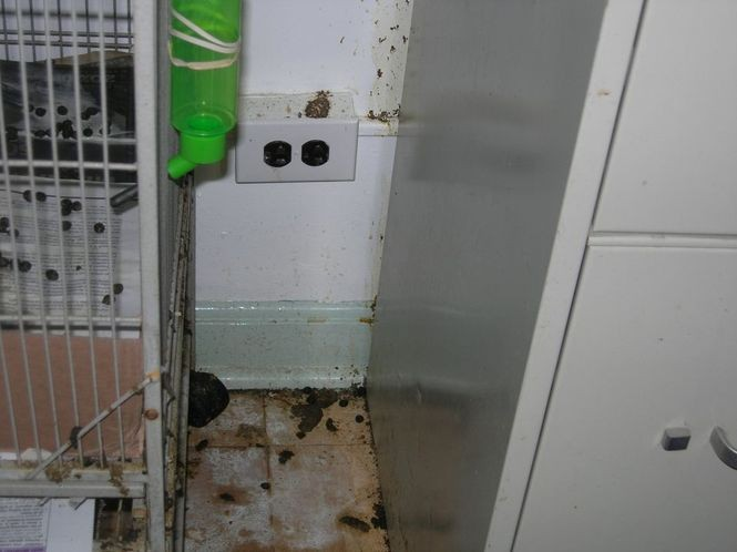 In a joint site visit by local and state Department of Health officials on Aug. 22, inspectors slapped the agency on Evergreen Avenue with 40 violations. (NJ Department of Health)