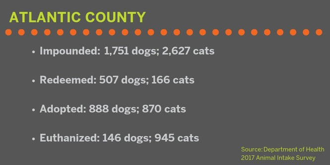 Thousands of N J  cats and dogs were euthanized  See how