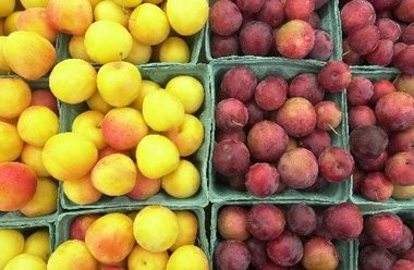 Yellow and red plums are irresistible at the farmer's markets.