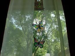 Butterflies on the window