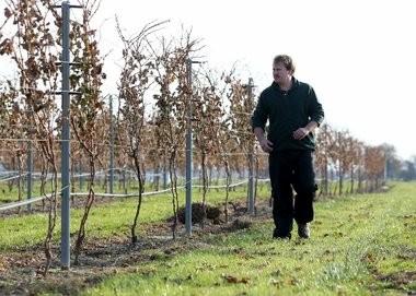 Andrew Dick of Auburn Road Vineyard & Winery in Pilesgrove walks down a row of dormant grape vines, Wednesday, Nov. 16, 2016. (Tim Hawk | For NJ.com)