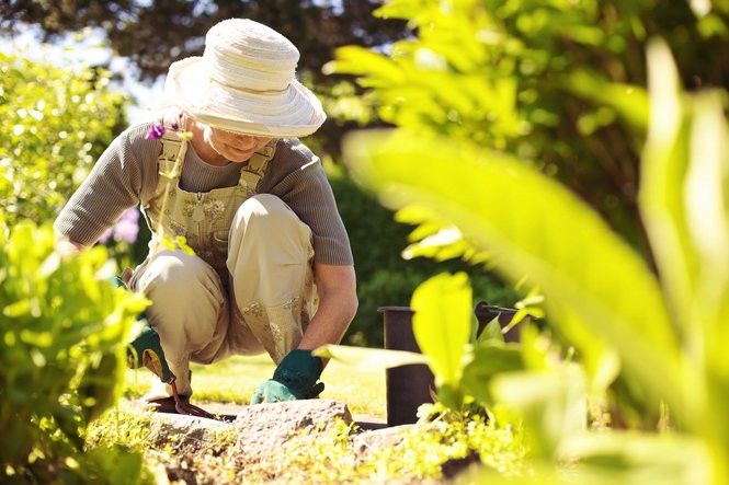 A green thumb can lead to a sharper mind and less risk of dementia.