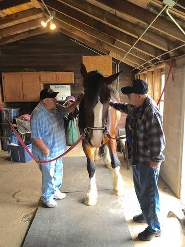 Walter Cooper and Jim Boehm work with Maverick, a Shire horse at Hoof Prints on the Heart, in Millstone Township, N.J.