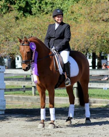 Mighty Mickey, Half-Arabian/Friesian gelding owned by Lisa Macchi