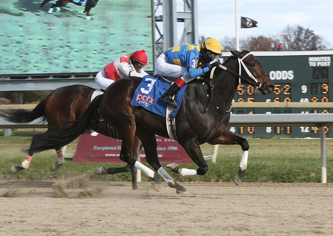 Trevor McCarthy aboard #3 Magical Fire, his first of five winners at Parx Racing Bensalem, Pa. on Nov. 22, 2016 (Photo By Barbara Weidl/EQUI-PHOTO)