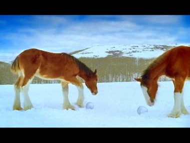 This image provided by Anheuser Busch from a commercial during a past Super Bowl shows Clydesdale horses making snowballs.