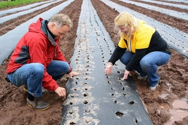 Pictured here, (from left) are Edward Vander Veen, vice president, Commercial Strategy & Operations, and Penny Negrin, senior administrative assistant, both from Novartis Pharmaceuticals Corporation, painstakingly poking holes in the plastic to plant one seed at a time and covering it up. (Photo by Ravenwood Photographic)