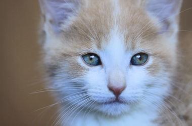 Tabby's Place, a cat sanctuary in Ringoes, invites visitors to a Kitten Shower on Saturday, June 6. Pictured is one of the many kittens available for adoption. (photo courtesy of Tabby's Place volunteer Heather Chalmers)