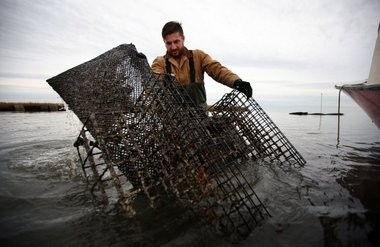 Matt Gregg checks a cage that holds the oysters, which are placed in mesh bags to protect them from predators such as stingrays and blue crabs.