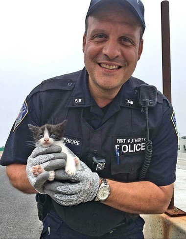 Port Authority Police Officer Nunzio DelPriore with his new friend Bridgette, a kitten that was found stuck in the side of Bayonne Bridge.