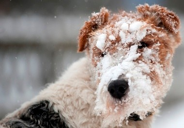 Experts advise pet owners to bring their animals inside during frigid temperatures.