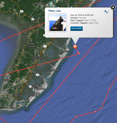 "Mary Lee, the 3,500-pound great white shark ""pinged"" on the OCEARCH tracker Sunday morning off the coast of Avalon."