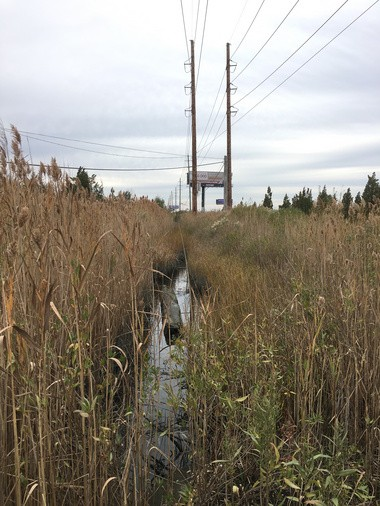 A view of the drainage canal where the bodies of four Atlantic City sex workers were found on Nov. 20, 2016, in Egg Harbor Township. (Mark Mueller | NJ Advance Media for NJ.com)