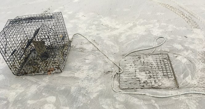 The crab trap that the turtles were caught in. Photo courtesy of Steve Ahern.