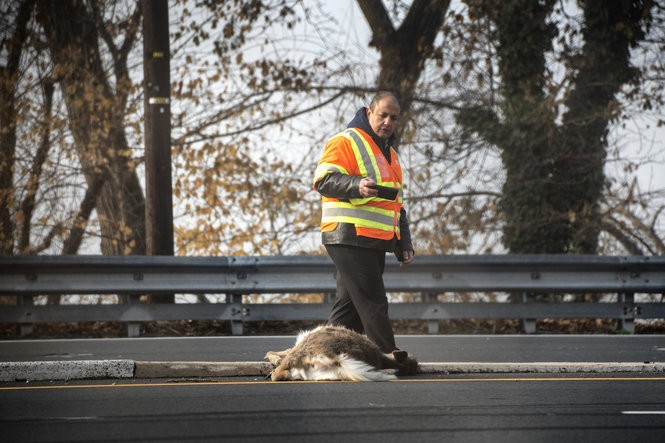 Where in N J  are you most likely to hit a deer? The top 20