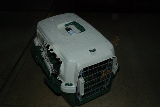 cat carrier2.JPG