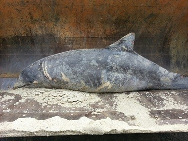 A dead dolphin was found washed ashore in Monmouth Beach earlier this month.