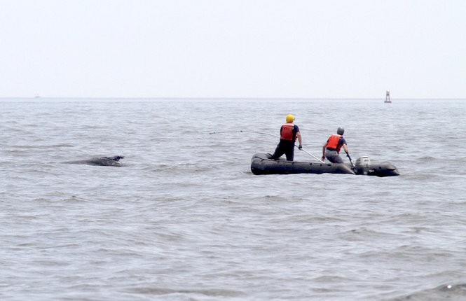The crew in the waters off Sandy Hook work to disentangle the whale. (Photo courtesy of NOAA Fisheries Public Affairs)